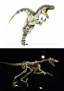 dromaeosaurus_zpsae59a82b.jpg