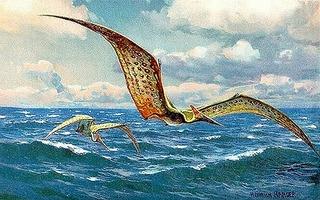 Pteranodon_hharder.jpg